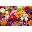 Floral Perfumes edt Rose RÓŻA 50 ml
